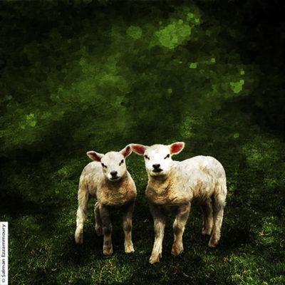 Maker Salman Ezzammoury Titel Lammetjes op de dijk bij de Cocksdorp - Texel Jaar 2016