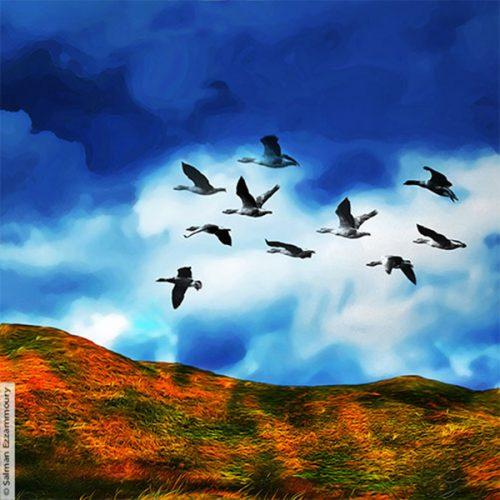 Maker Salman Ezzammoury Titel Vliegende wilde ganzen op Texel Jaar 2016