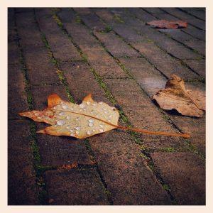 ML0016-druppel-blad - instagram- fotografie van Marjolein Lensink - fotografie - Zaansgroen