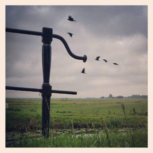 ML0021-poldervogels - instagram- fotografie van Marjolein Lensink - fotografie - Zaansgroen
