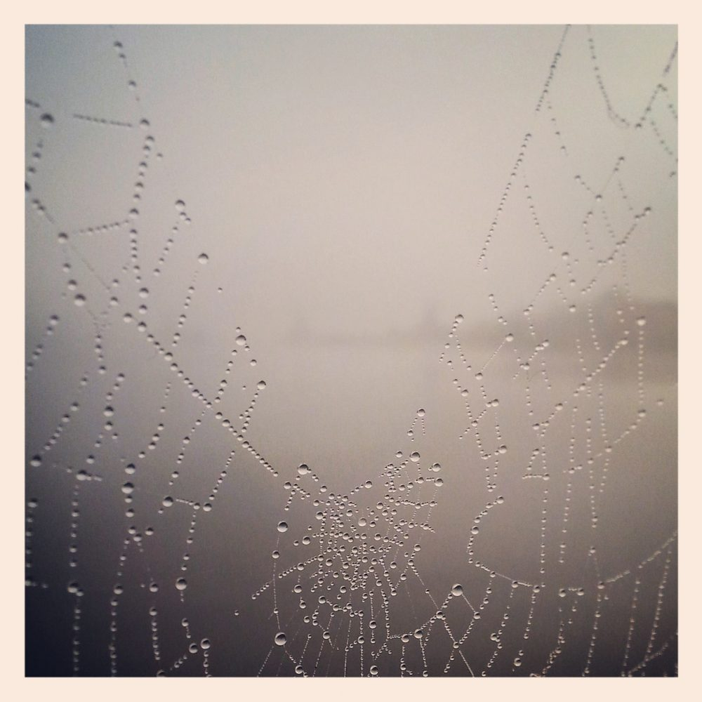 ML0028-spinneweb-druppels - instagram- fotografie van Marjolein Lensink - fotografie - Zaansgroen