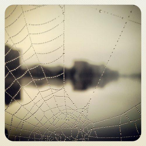ML0029-spinneweb-druppels - instagram- fotografie van Marjolein Lensink - fotografie - Zaansgroen