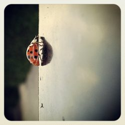 ML0037-lieveheersbeest - instagram- fotografie van Marjolein Lensink - fotografie - Zaansgroen