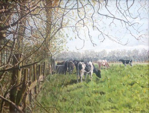 20772 nel keeman van gelderen koeien in de wei